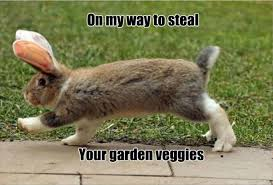 Funny Rabbit Memes - 30 funny animal captions part 58 30 pics amazing creatures