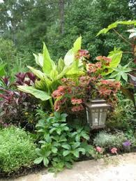 best 25 small tropical gardens ideas on pinterest palm trees