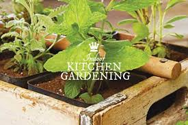 how to get started with indoor food growing empress of dirt