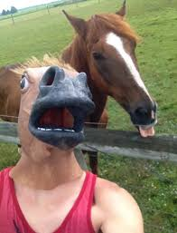 Horse Head Mask Meme - funny horse mask pictures