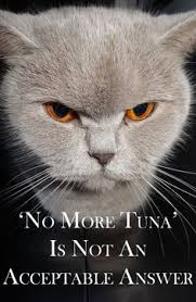 Sarcastic Cat Meme - sarcastic cat quotes cat memes book series cozy conundrums