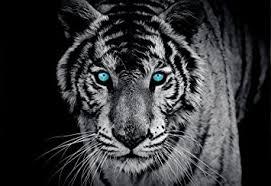 tiger black white wallpaper mural amazon com