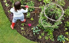 container vegetable gardening vegetable gardening tips for