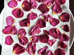 Rose Petals Best 25 Rose Petals Ideas On Pinterest Diy Rose Petal Bath