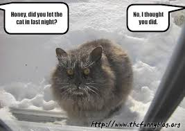 Funny Winter Memes - funny cat vs winter did you let in every thing pinterest