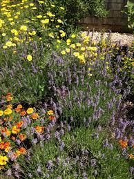 Flowers That Keep Mosquitoes Away Spring U2013 Health Literacy