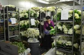 flower wholesale distribution software cut flower distribution