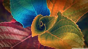 colorful plant 4k hd desktop wallpaper for 4k ultra hd tv