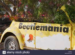 yellow volkswagen beetle royalty free shrubs growing through old volkswagen beetle on fuerteventura