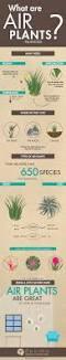 homelife 10 best plants for vertical gardens 110 best plants images on pinterest plants landscaping and
