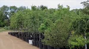 native plant nursery oregon winterland nursery oregon wi youtube