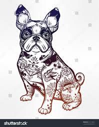 vintage style beautiful bulldog pug dog stock vector 621116801