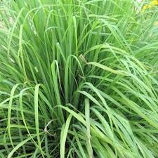 herbe cuisine de a à z les aromates condiments épices et herbes aromatiques