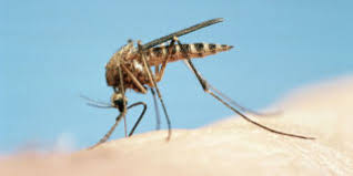 How To Keep Mosquitoes Away From Backyard How To Keep Mosquitoes Away Geting Rid Of Mosquitoes