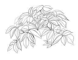 lesson 3 drawing plants