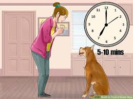 boxer dog 10 months 3 ways to train a boxer dog wikihow