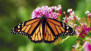can you do anything to help a butterfly s broken wing animals
