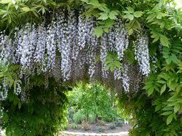 il giardino il giardino segreto il giardino degli angeli