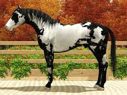 catalog of stallions smart color stable