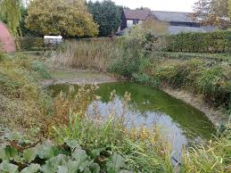 uk native pond plants pond de silting thaxted the pond specialist