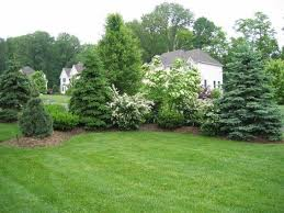 Landscaping Ideas For Backyard Privacy Design Of Backyard Privacy Landscaping Ideas 1000 Images About