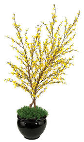4 foot forsythia tree autograph foliages