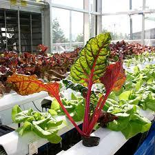 how to build an indoor hydroponic vegetable garden dengarden