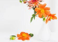 dalia in vaso dalia in un vaso fotografia stock immagine di perenne 66363522