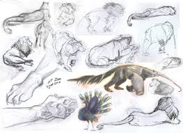 zoo drawing images reverse search