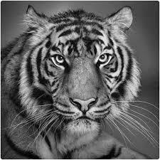 30 best basic animal drawings images on pinterest animal
