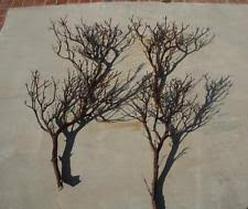 manzanita tree branches manzanita branches centerpieces table decor ebay