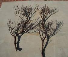 manzanita branches for sale manzanita branches centerpieces table decor ebay