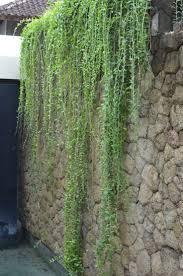 Garden Boundary Ideas by Best 25 Boundary Walls Ideas On Pinterest
