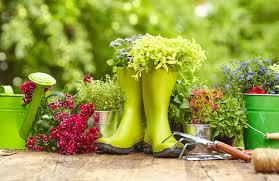 gardening tips for an easy allergy fix kara fitzgerald nd