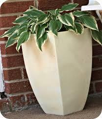 best plant pot