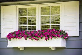 container gardening for beginners windowbox com blog