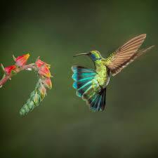 40 colorful photos of birds blog viewbug com