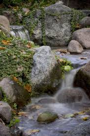 Aquascape Inc Falling Leaves Feeding Koi And Other Pond Tips