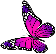 butterfly pink and purple transparent png clip art image