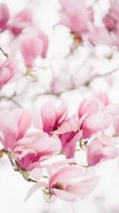 Magnolia Wallpaper by Magnolia U2013 Sonya Khegay Photography
