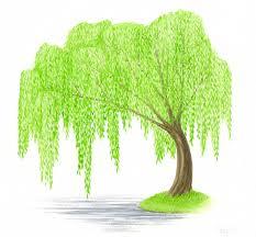 water colour tree original painting tree watercolor weeping