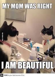 Anxiety Cat Memes - cute anxiety cat meme segerios com segerios com