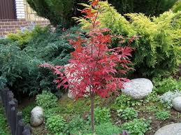best trees to plant for small yards best trees to plant