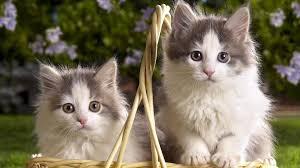 998866 color wallpapers page 4 cute kitten basket sweet animal