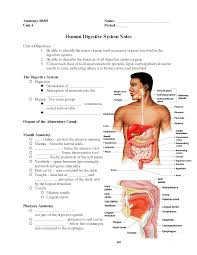 Male Internal Organs Anatomy Topic Internal Archives Page 2 Of 3 Human Anatomy Educations