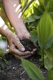 best soil for growing vegetables soil preparation for your