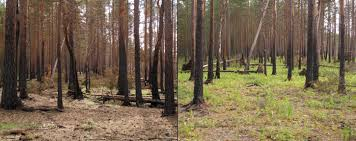 Russian Boreal Forest Disturbance Maps by Wildfire