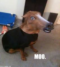 Horse Head Meme - we love seeing our horse head mask being put to good use things