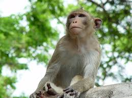 monkey a message from one of our spirit animals