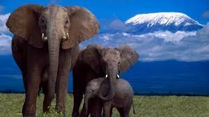 desktop hd cartoon pictures of elephants